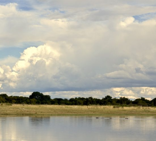 Hwange National Park. Photo by Nicholas Blatch